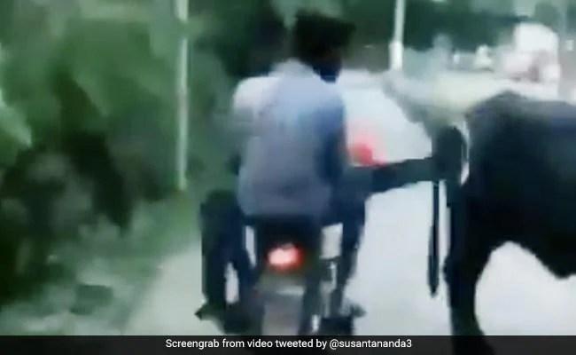 चलती गाड़ी में मस्ती-मस्ती में मारी भैंस को लात, ऐसे पड़ी 'ऊपर वाले की लाठी' - देखें Viral Video