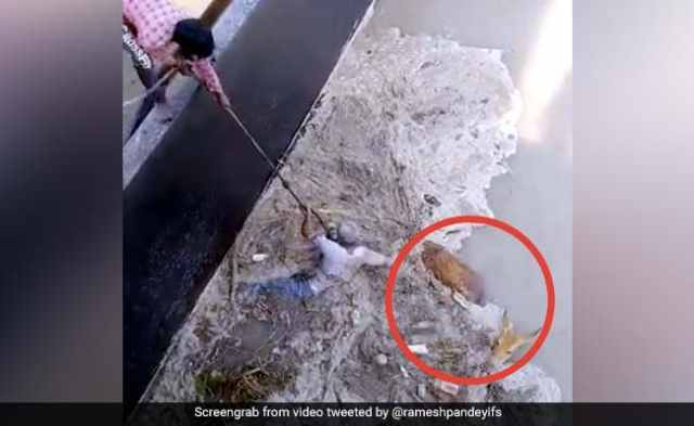 The deer was trapped in the river, the person saved his life by hanging himself in the air ... Watch Viral Video