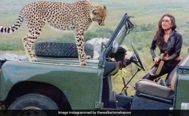 करिश्मा कपूर को चीता के साथ इस तस्वीर में दिखने की हर वजह है