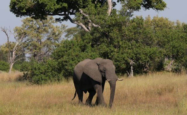 Mysterious Deaths Of Over 350 Elephants In Africa Baffle Scientists