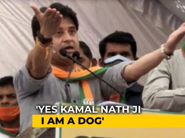 """Haan, Main Kutta Hoon"": Jyotiraditya Scindia Says Kamal Nath  Called Him ""Dog"""