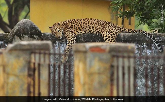 Wildlife Photographer Of The Year 2020: Indian Photographers Who Impressed Judges