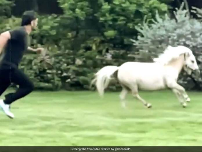 """MS Dhoni Enjoys """"Playtime"""" With A Pony, Wife Sakshi Shares Video. Watch 