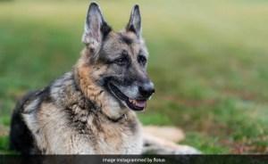 "Joe Biden's champion dog, ""darling companion"" for 13 years, dies"