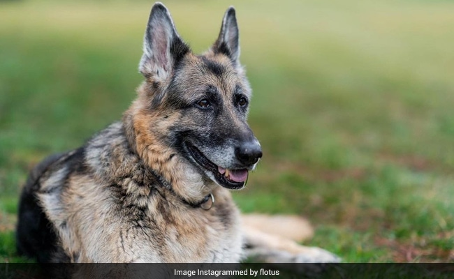 Joe Biden's Dog Champ, 'Cherished Companion' For 13 Years, Dies