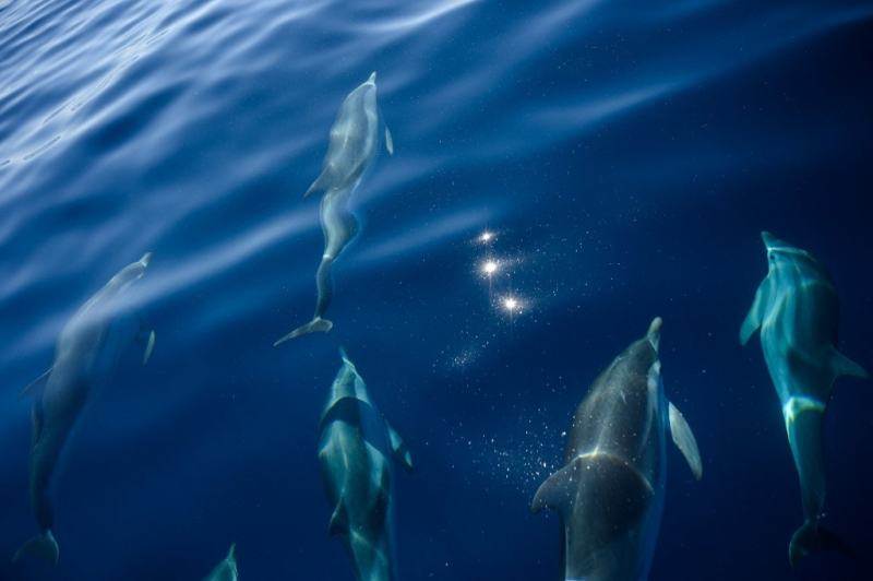 Outcry As 1,400 Dolphins Slaughtered In A Day In Faroe Islands Of Denmark
