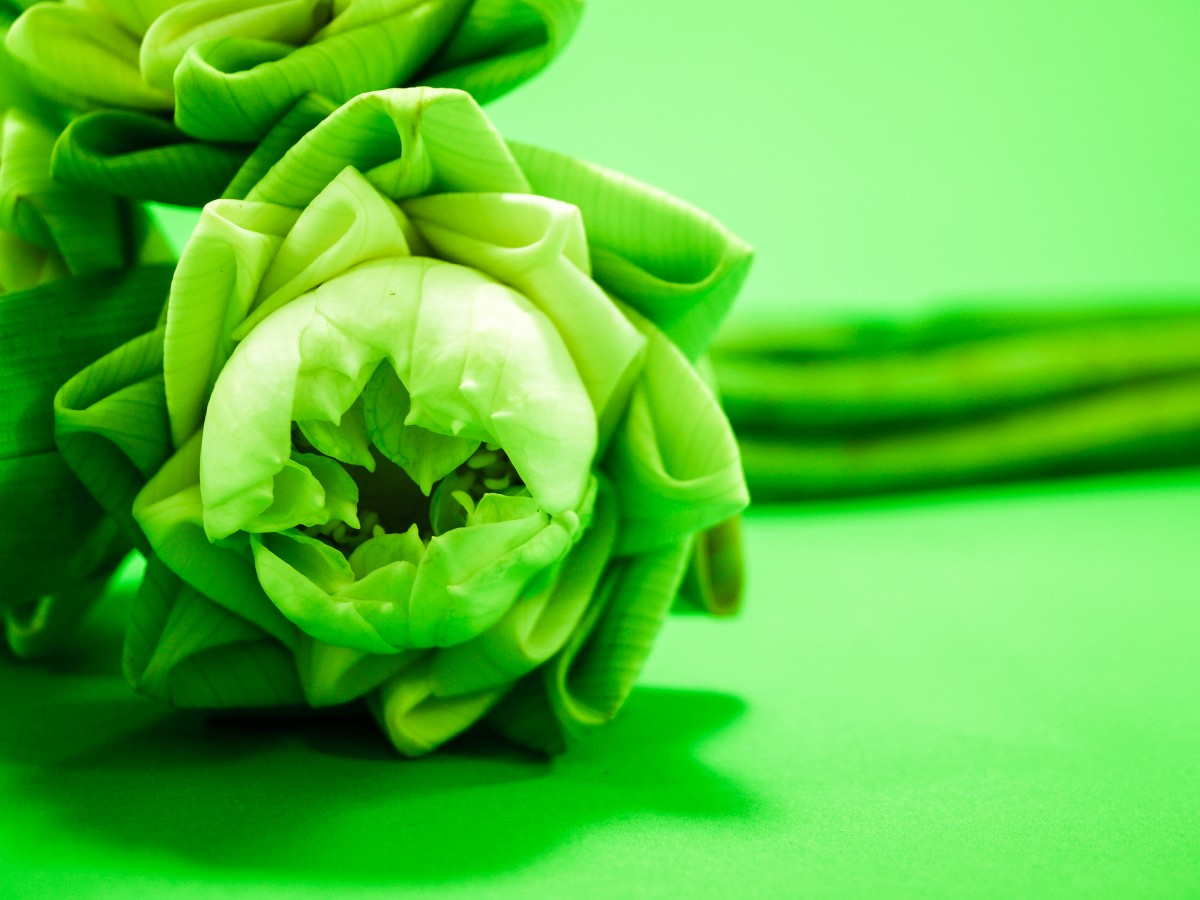 Spring Wallpaper Hd รูปภาพ กลีบดอกไม้ ดอกบัว สวย พื้นหลัง ธรรมชาติ สี