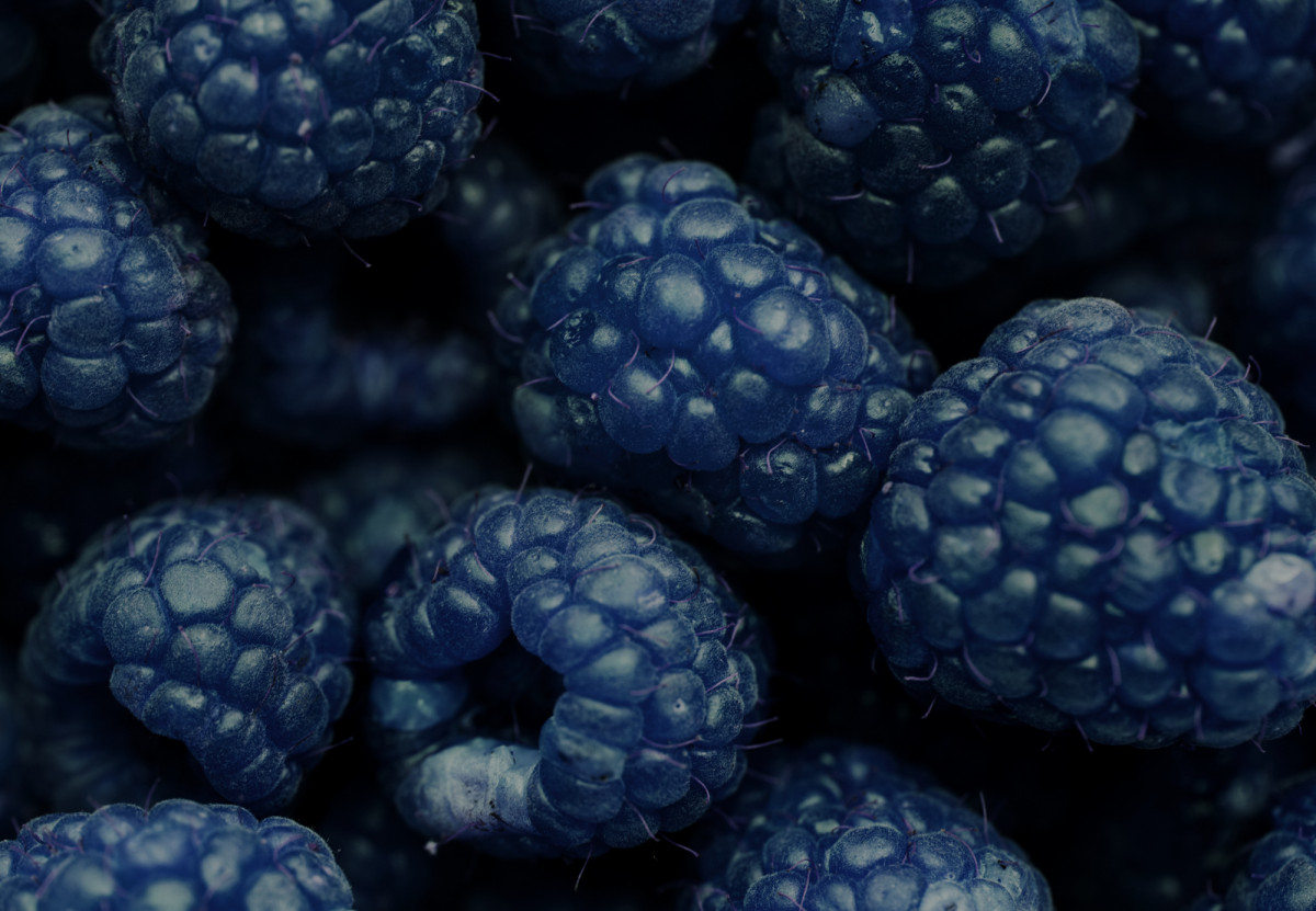 Free Images  background berry blackberry blue closeup