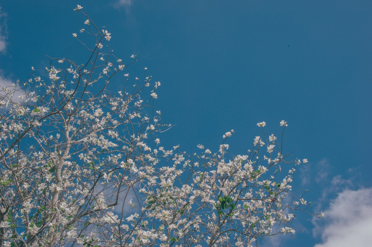 Cute Computer Wallpaper Tumblt รูปภาพ ดอกไม้ สวย ภูมิประเทศ สีพาสเทล สด ธรรมชาติ