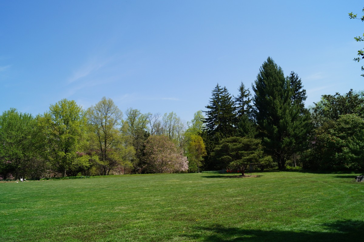 Free Images  Landscape, Tree, Nature, Forest, Grass