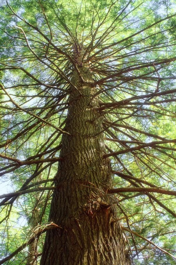 Gratis Billeder Tr Skov Afdeling Bagagerum Log