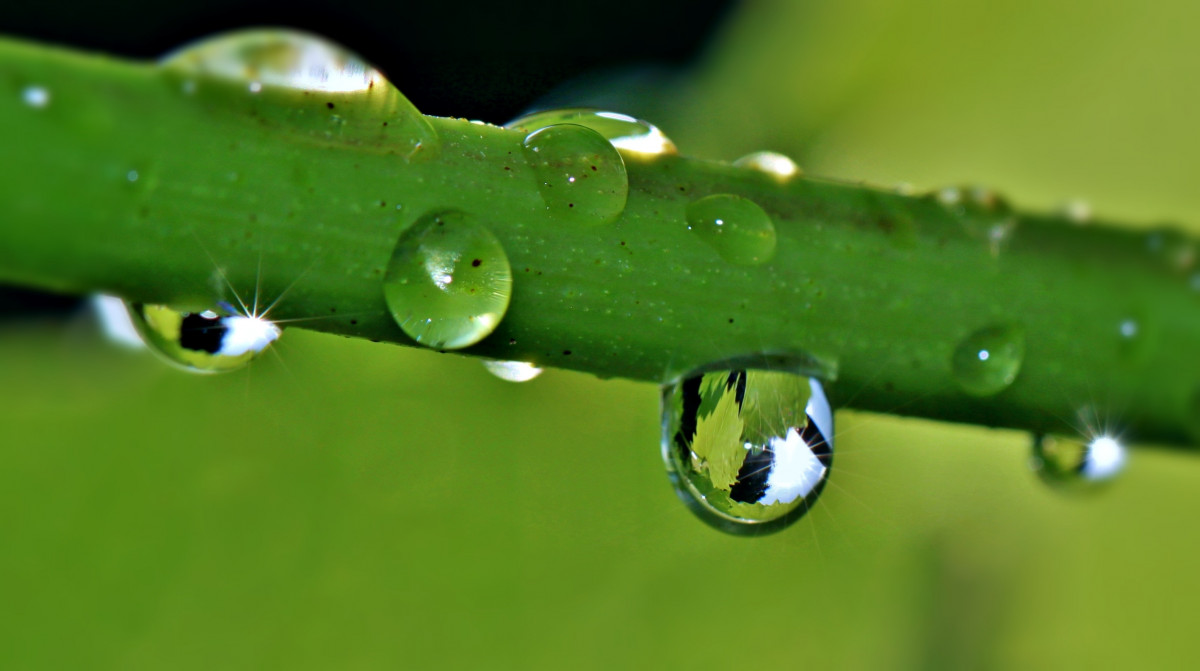 Drop Of Water Falling From A Leaf Wallpaper Free Images Liquid Light Structure Rain Wave Glass