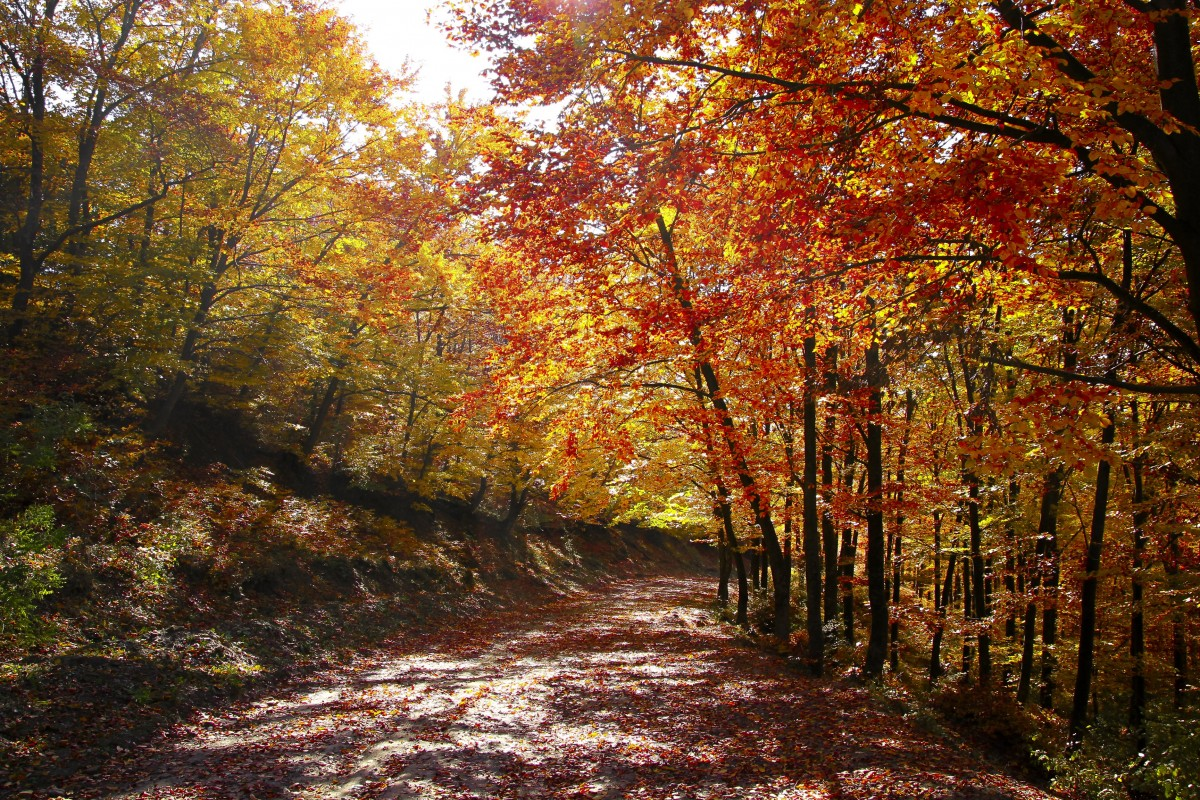 Wallpaper For Fall And Autumn Free Images Autumn Landscape Greece Centaurus Nature