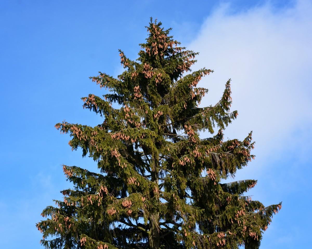 Gambar  pemandangan alam cabang menanam hijau