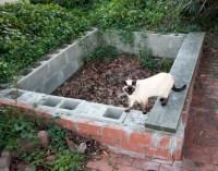 Free Images : cat, feline, backyard, garden, brick, goats ...