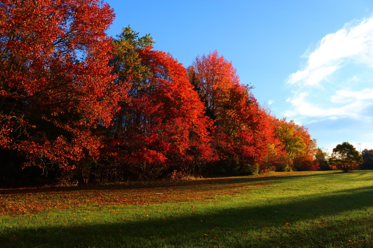 Fall Landscape Wallpaper Free Images Tree Grass Horizon Cloud Sky Lawn Leaf