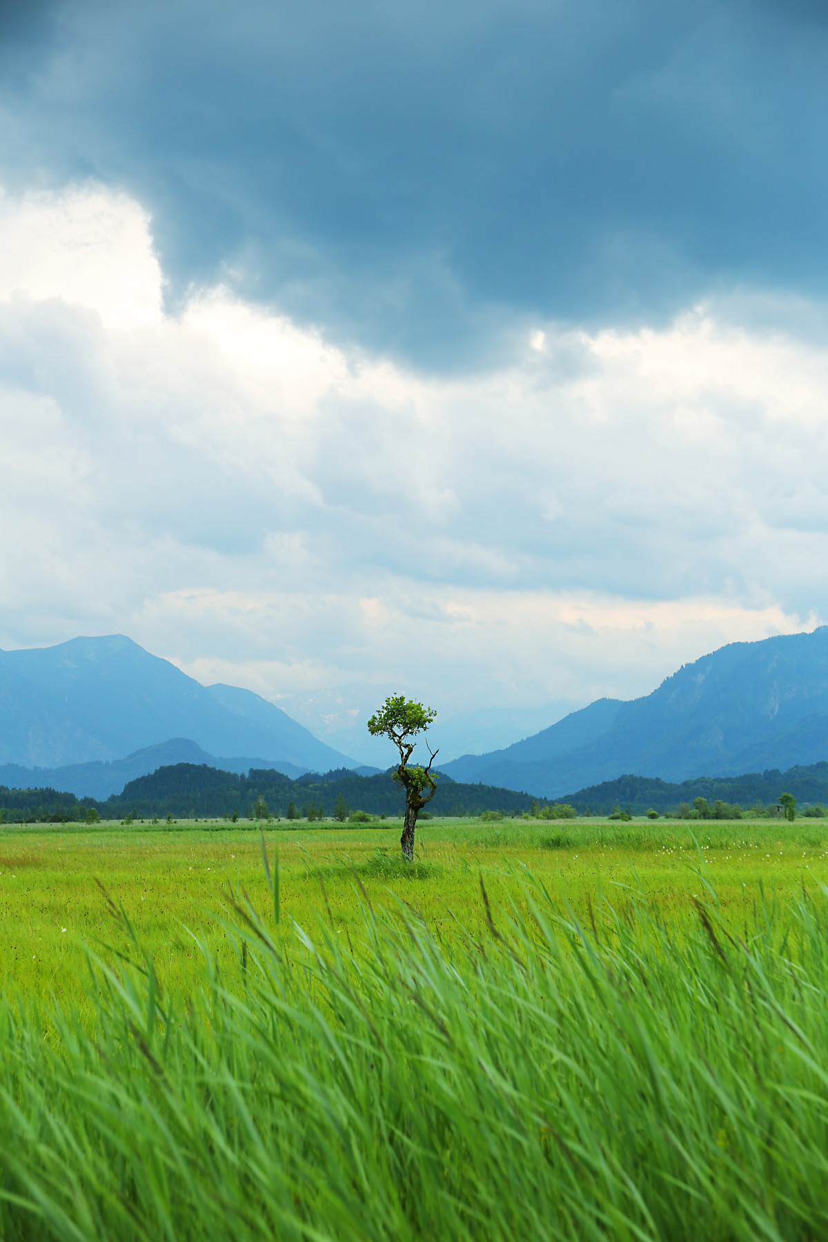 Gambar  pemandangan hutan gurun gunung bidang padang