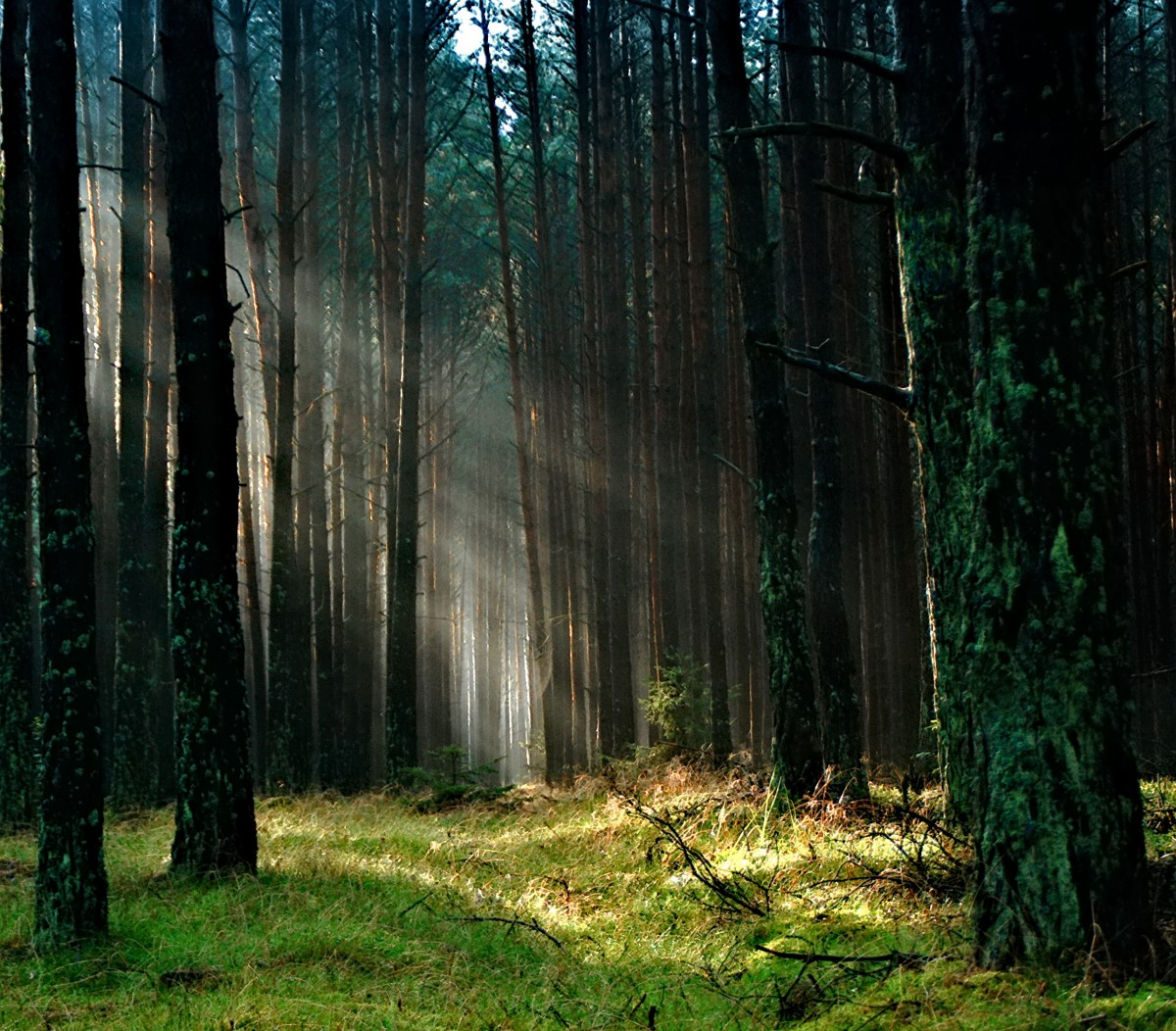 Free Images Tree Nature Wilderness Branch Sunlight