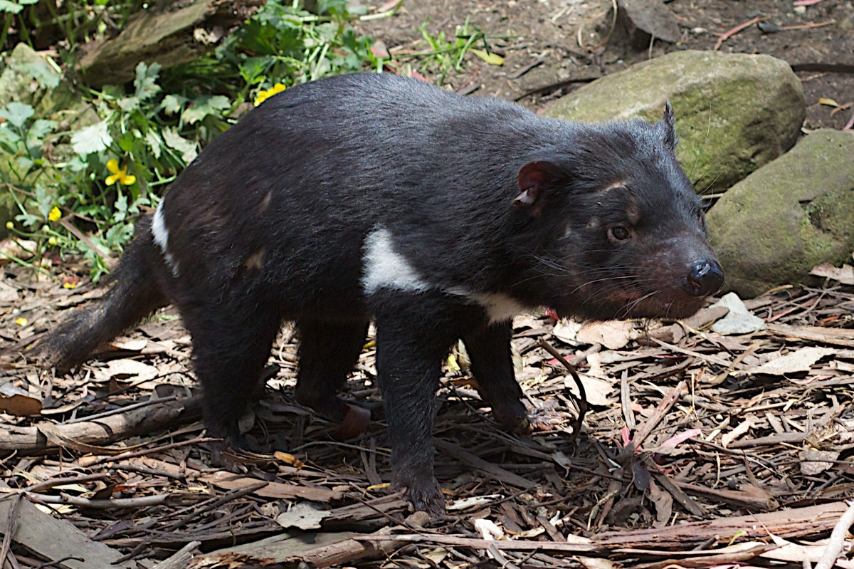 Free Images  wildlife zoo mammal fauna vertebrate