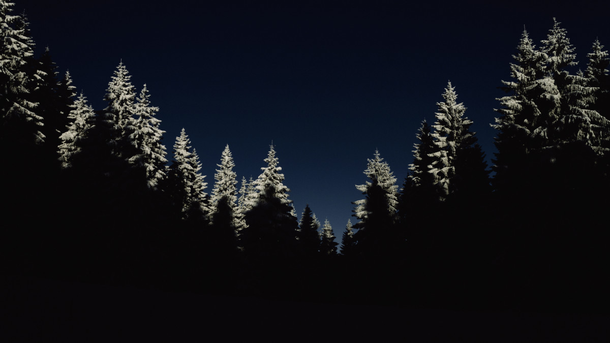 Free Images Tree Nature Forest Branch Silhouette