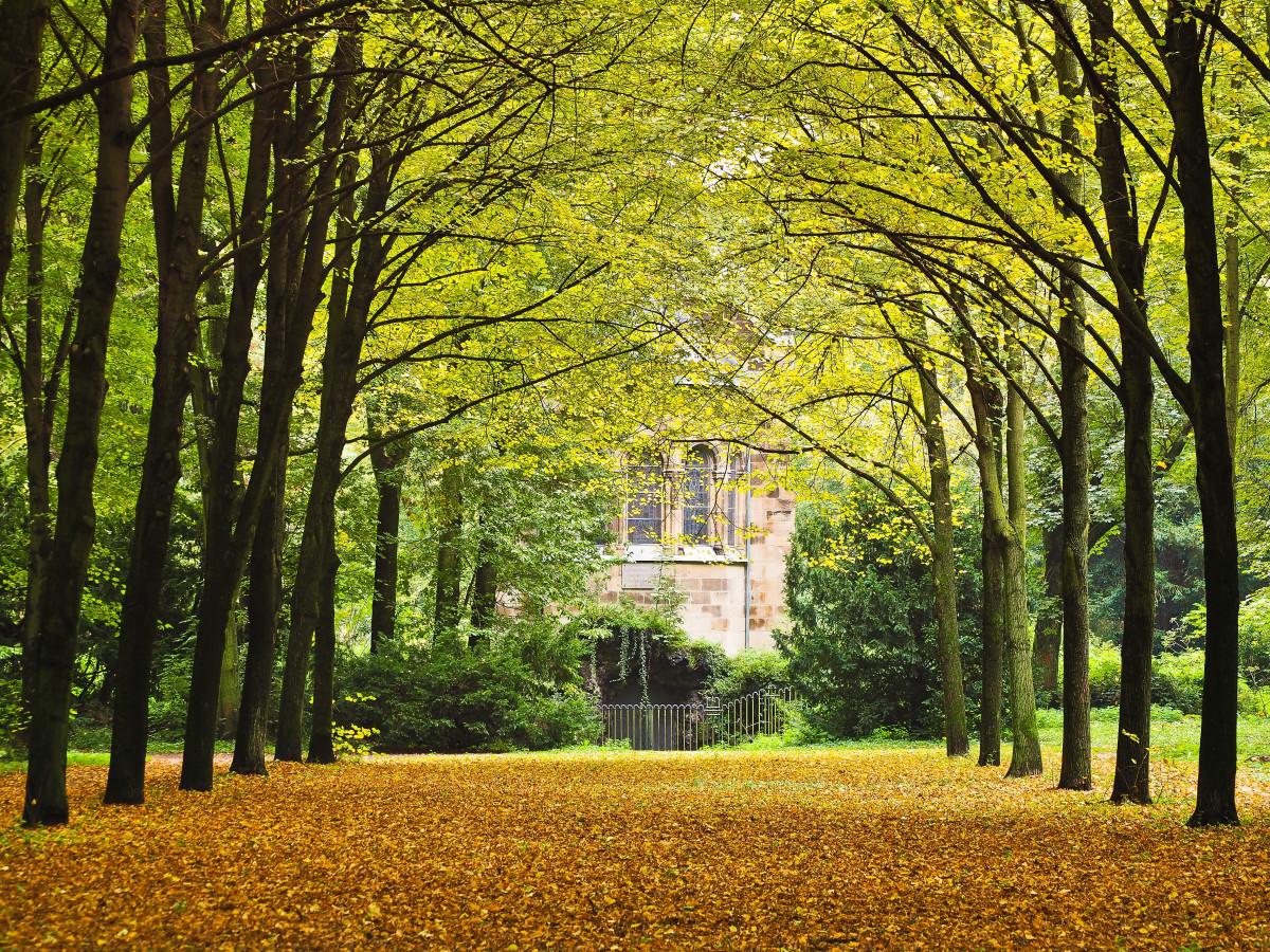 Fall Autumn Desktop Wallpaper รูปภาพ ภูมิประเทศ ธรรมชาติ ปลูก สนามหญ้า ทุ่งหญ้า