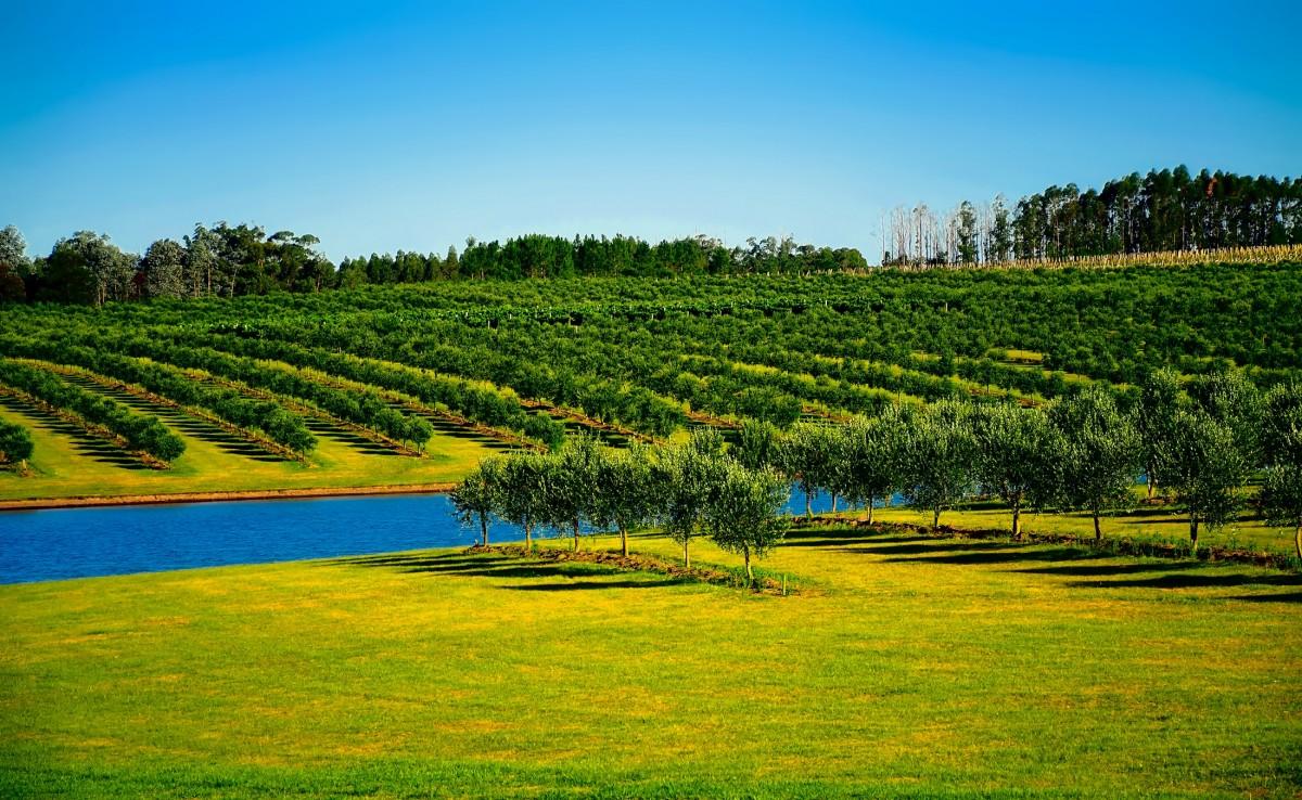 Gambar  pemandangan pohon air alam bidang tanah