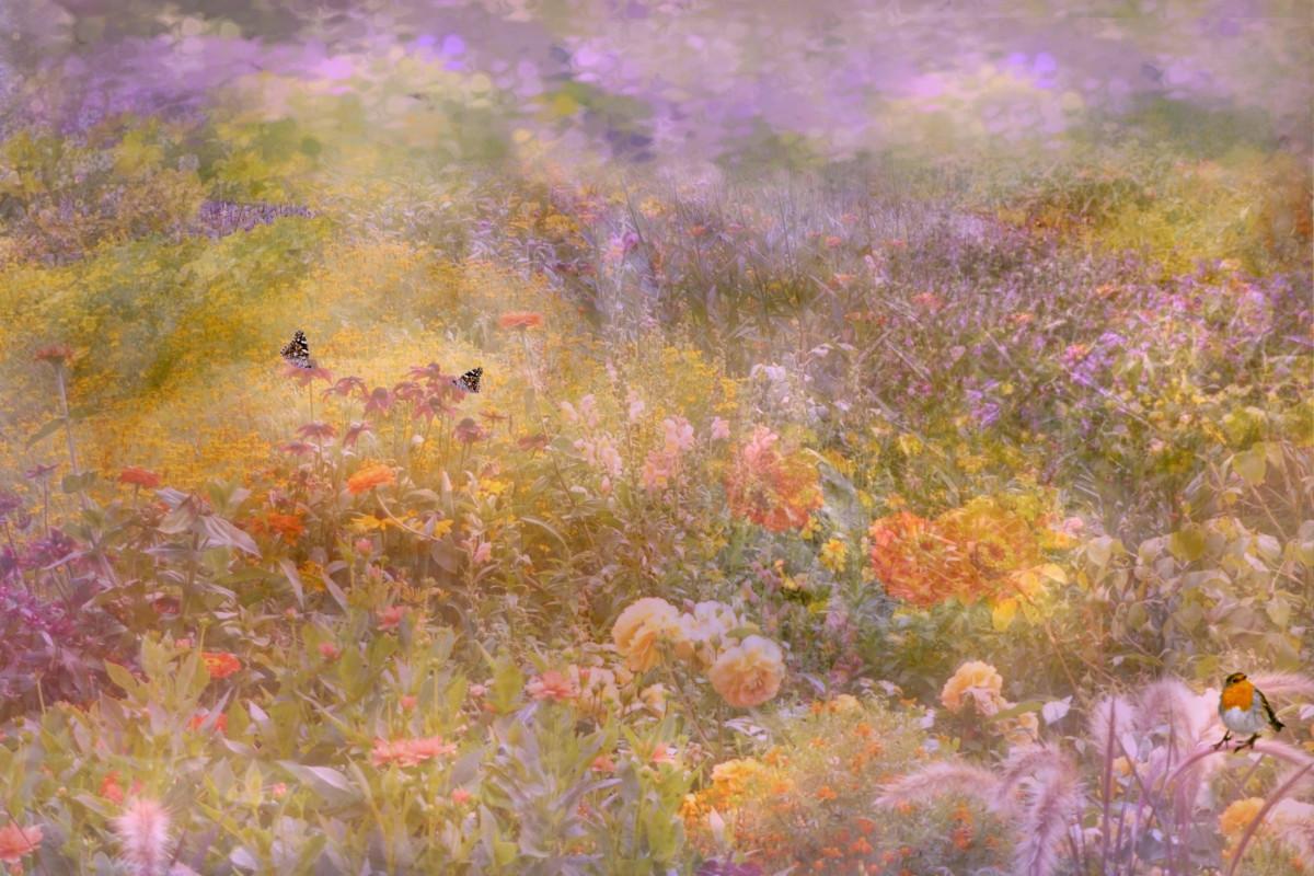 Free Fall Season Wallpaper Free Images Plant Prairie Sunlight Texture Leaf