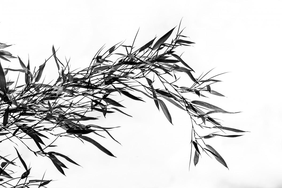 arbre herbe branche noir et blanc