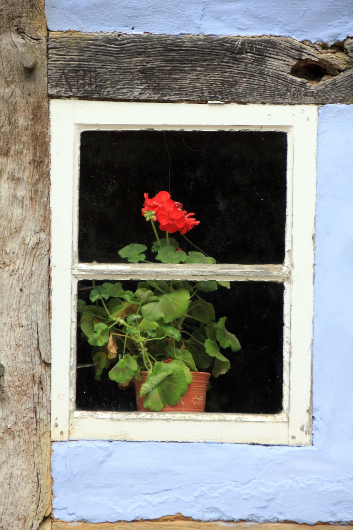 Images Gratuites Plante La Photographie Fleur Fentre