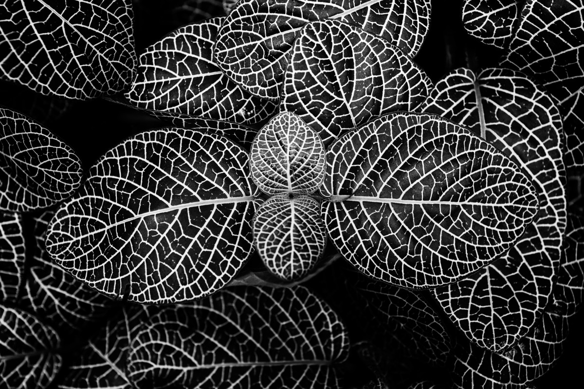 Dark Black Wallpaper Hd Free Images Black And White Texture Pattern Line