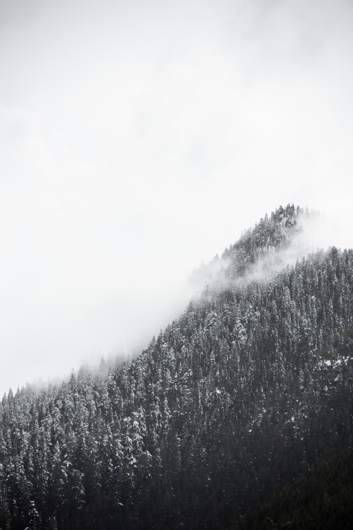 Tree Black And White Wallpaper Free Images Landscape Tree Nature Forest Mountain