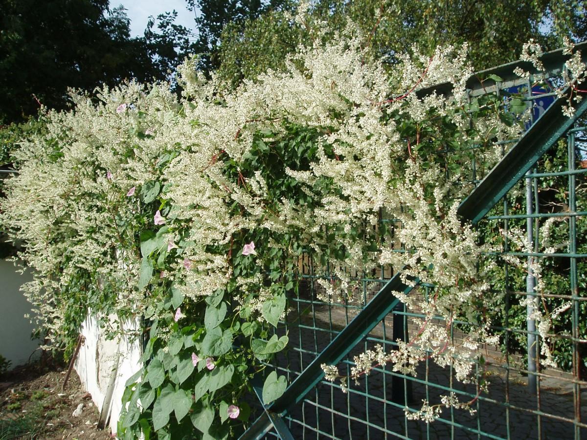Images Gratuites  fleur chalet arrirecour botanique jardin flore arbuste haie plante