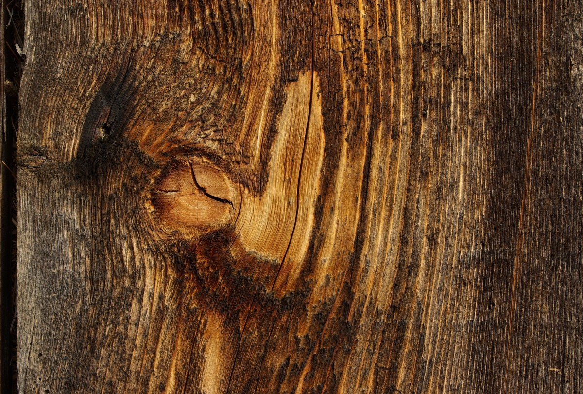 Free Images Tree Structure Board Texture Floor