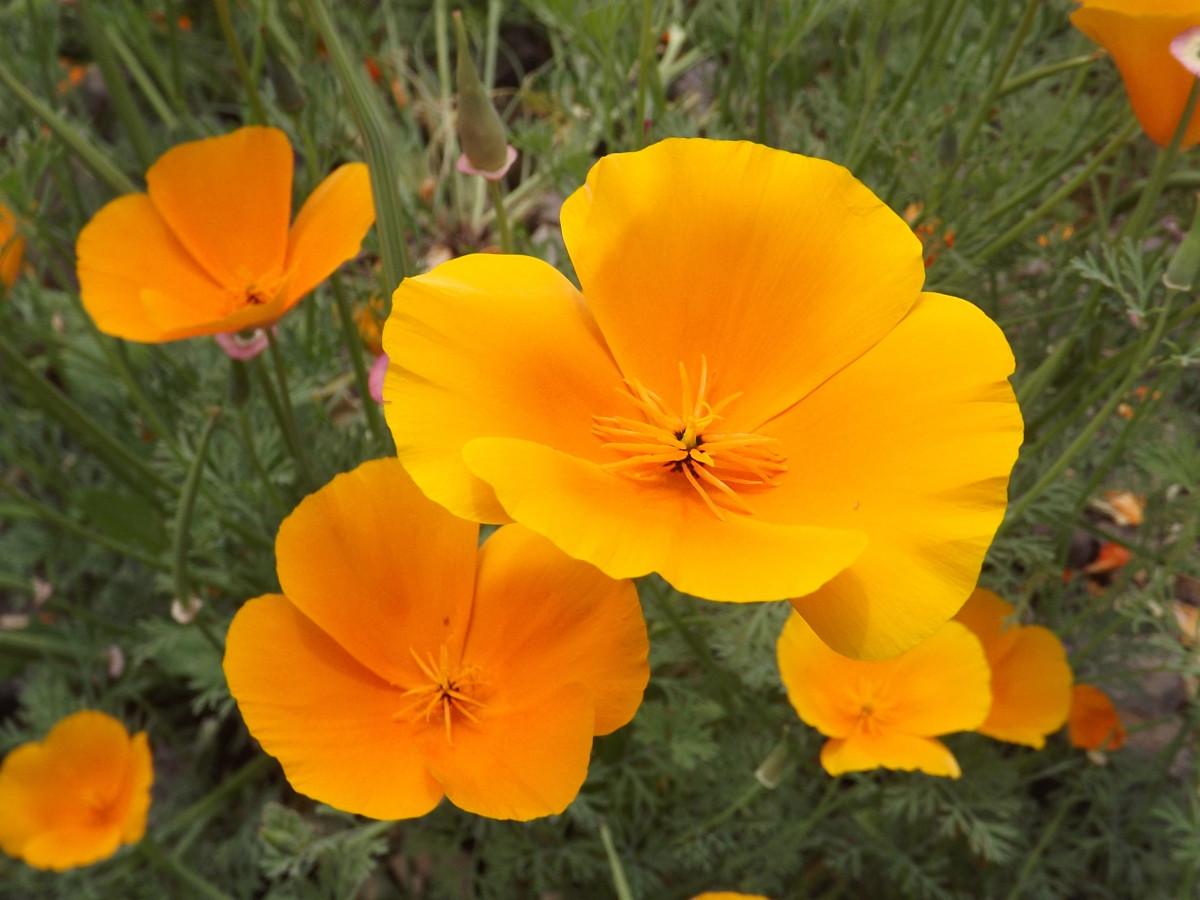 Welche Blumen Im September Pflanzen Balkon