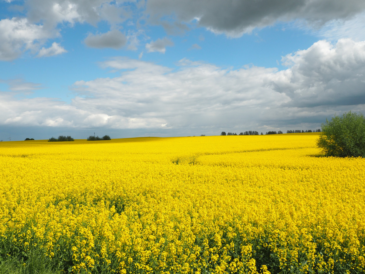 Free Images  landscape nature horizon blossom sky