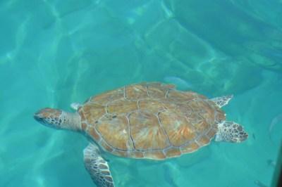 Free Images : water, ocean, summer, diving, underwater ...