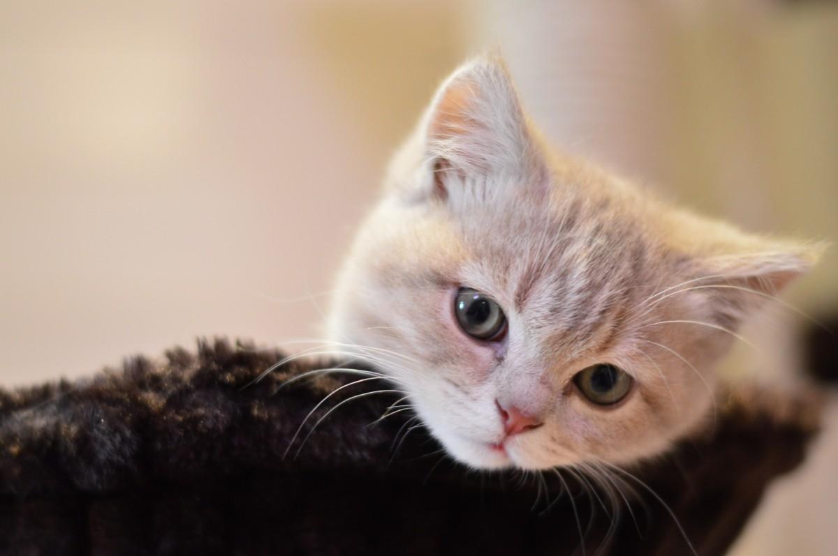 Cute Anime 3d Wallpaper รูปภาพ น่ารัก ลูกแมว ใกล้ชิด จมูก เครา คิตตี้