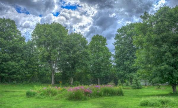free landscape tree
