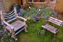 Free Nature Grass Plant Lawn Flower Chair