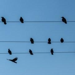 Duck Wing Diagram Welding Generator Wiring Free Images Wire Fauna Blue Sky Birds