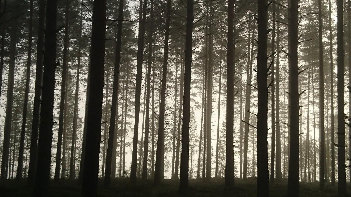 Old English Wood Dark