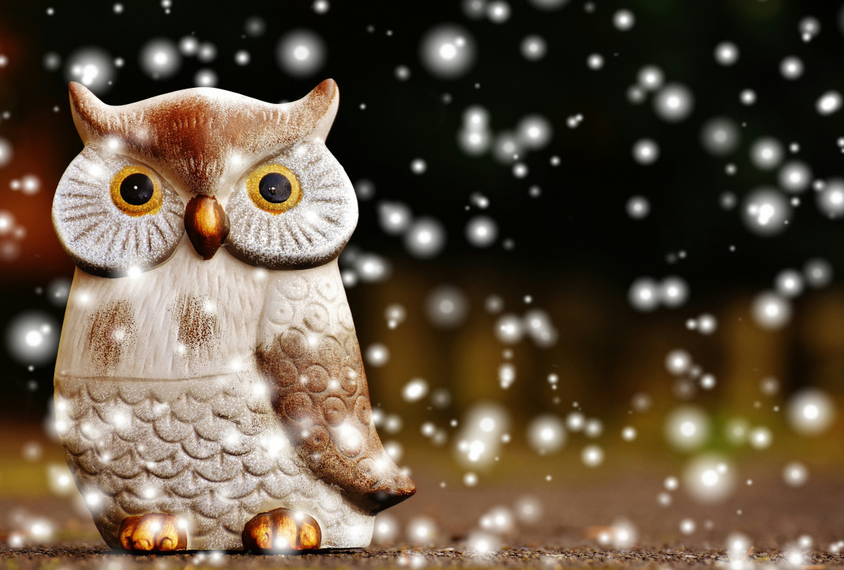 Animal Computer Wallpaper Free Images Snow Winter Animal Cute Decoration