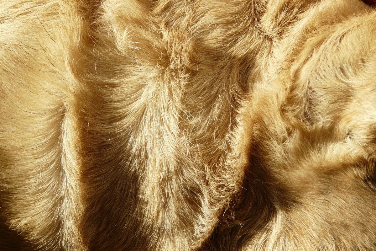 Free Images  fur mane material high voltage close up textile experiment charged grass