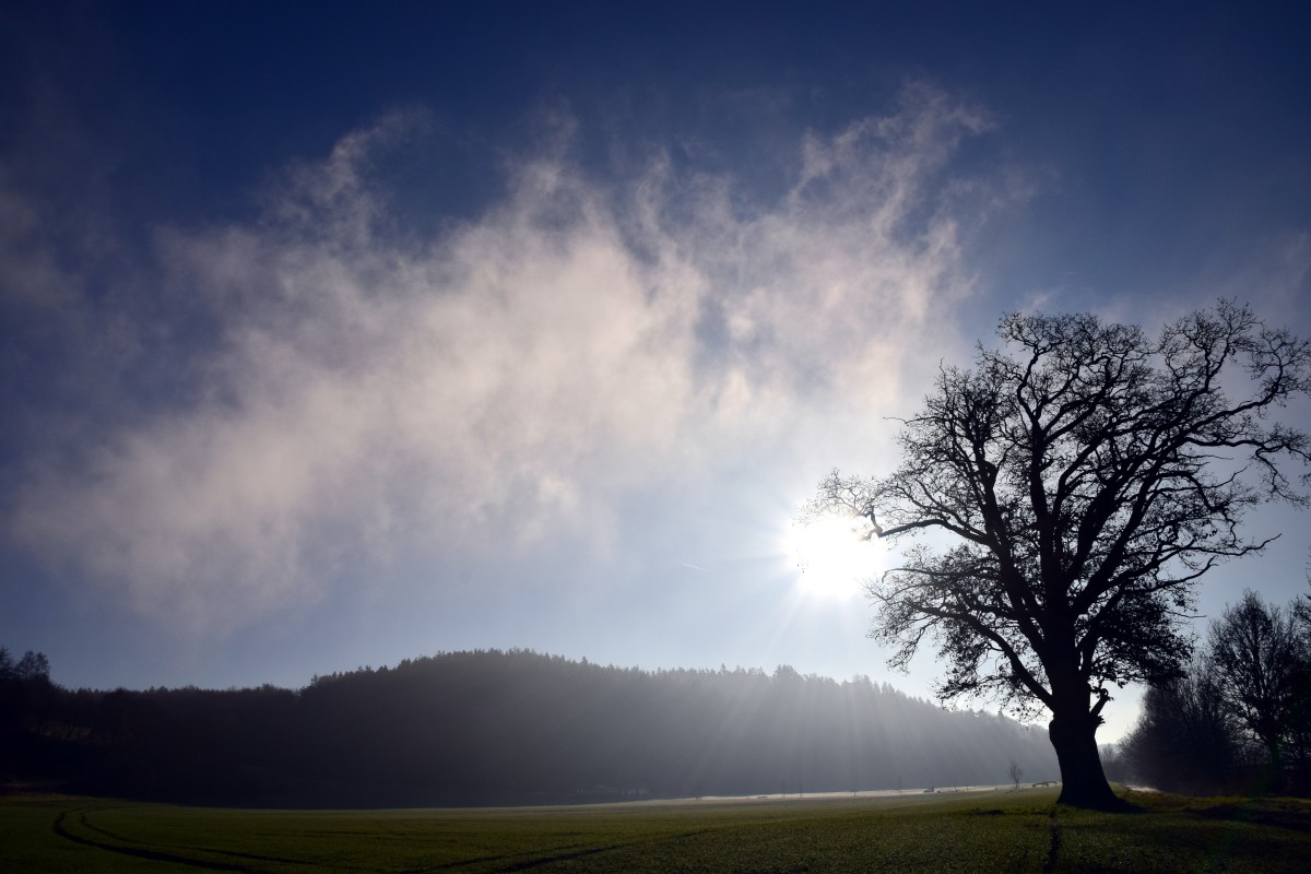 Free Images Nature Horizon Branch Silhouette Snow
