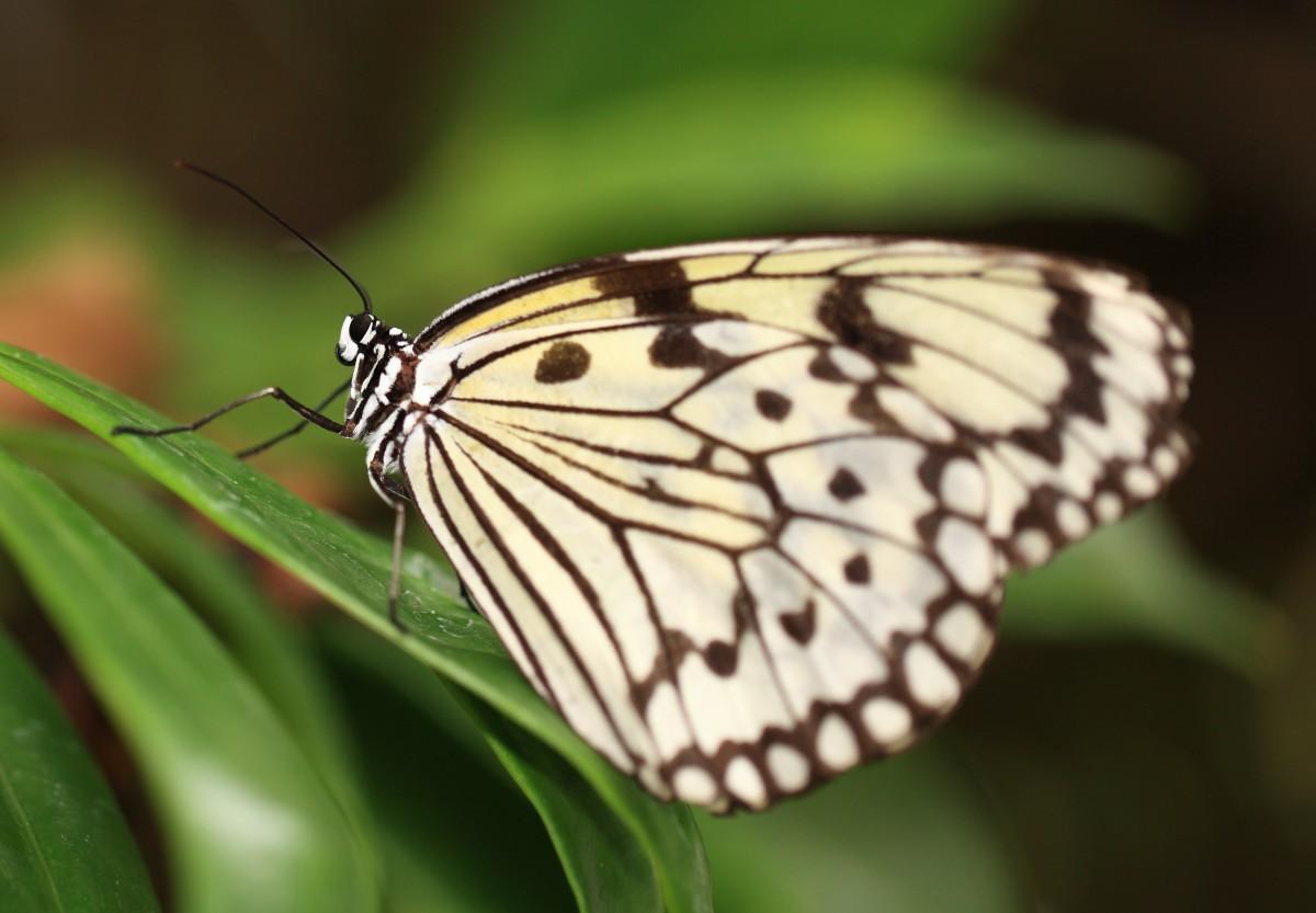 Gambar  alam sayap bunga tinggi serangga taman