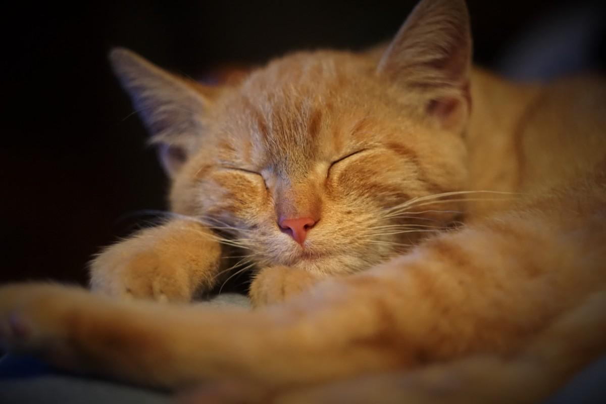 Cute Kitten Wallpaper Free Free Fotobanka Pohled Roztomil 253 Dom 225 C 237 Zv 237 ře Kotě