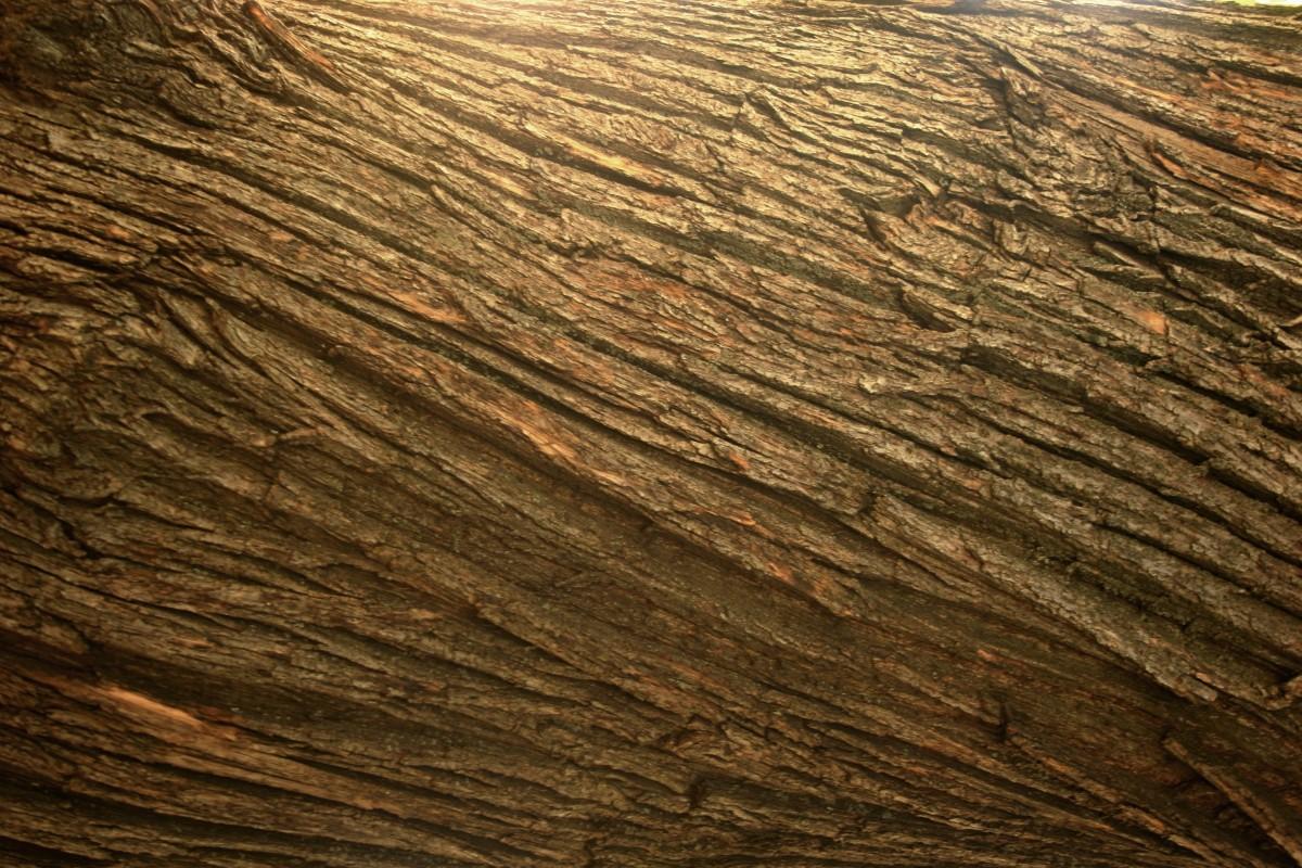 Gambar  pohon batu tekstur lantai bagasi pembentukan