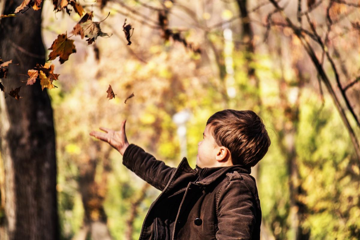 Free Images  people leaf spring autumn brown