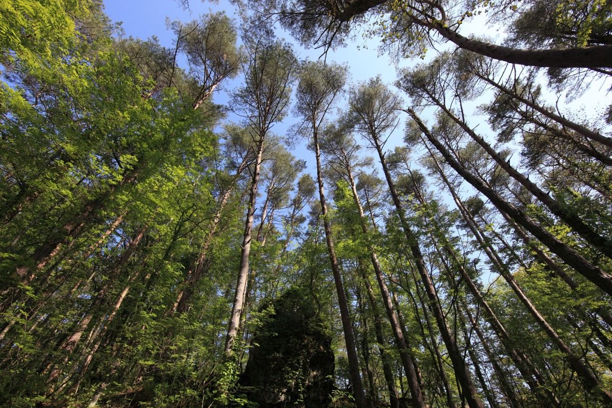 Gambar  pohon rumput gurun cabang gunung menanam