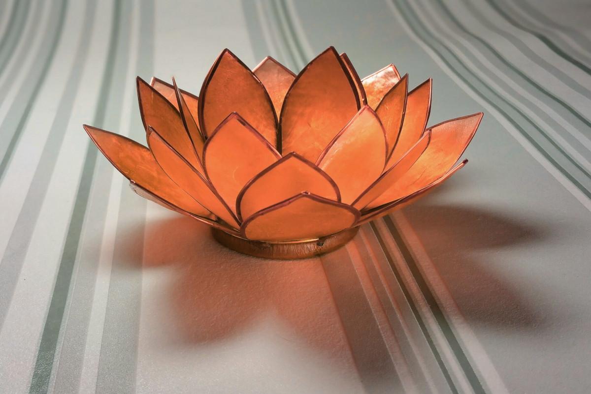 Free Images Wheel Leaf Flower Petal Glass